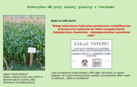 czeskakukurydza