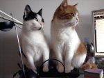 Moje koty